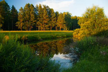 swampy: Forest river landscape view in evening sunset light