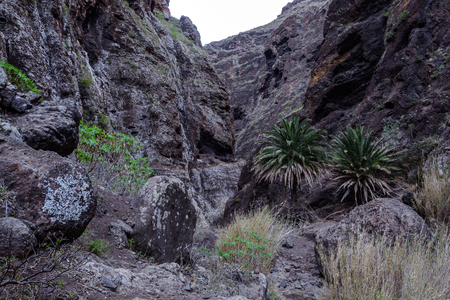 Hiking in Gorge Masca. Volcanic island. Mountains of the island of Tenerife, Canary Island, Spain. Foto de archivo