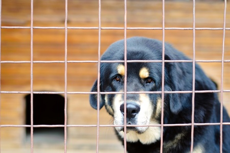 a sad alone dog in the cage Stock Photo - 10665886