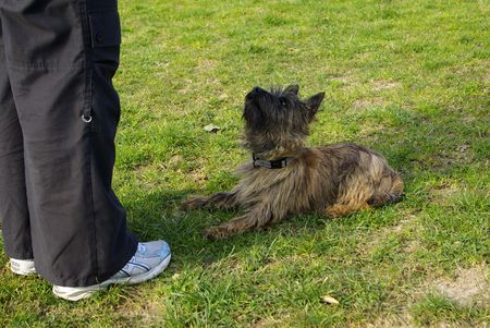 This is a view on a very attentive little dog during exercise Stock Photo - 6436981