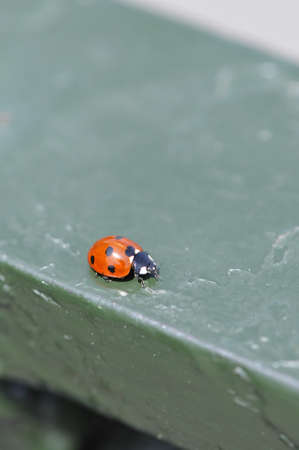 guard rail: Close-up of a red ladybug on a green guard rail Stock Photo