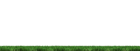 Strip of Very Well cut Green Grass with a white background