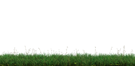 Strip of Wild Green Grass with a white background 스톡 콘텐츠