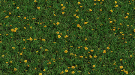 Up View of Field with wild grass and Lots of Yellow Head Dandelions