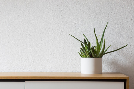 Agave in white pot on modern wooden sideboard