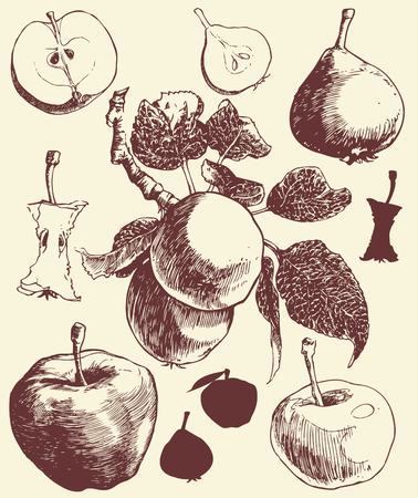 Art-illustration that represents the hand-drawn image of apples and pears