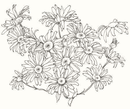 camomile flower: the hand-drawn daisy flowers. Illustration