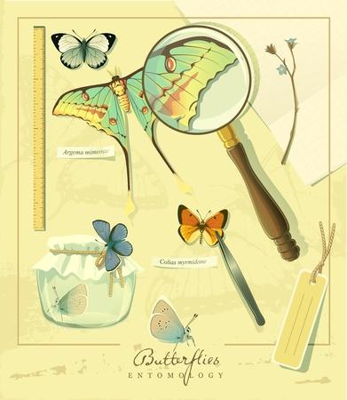 Art-illustration that represents the entomology set of butterflies. Vector
