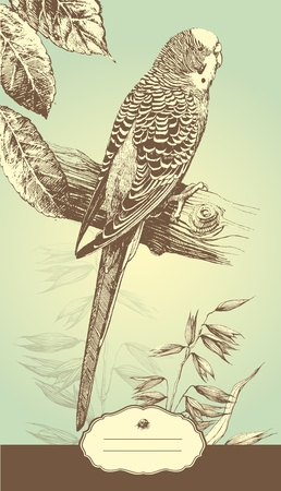 art-illustration that represents the hand-drawn Australian budgie. Vector