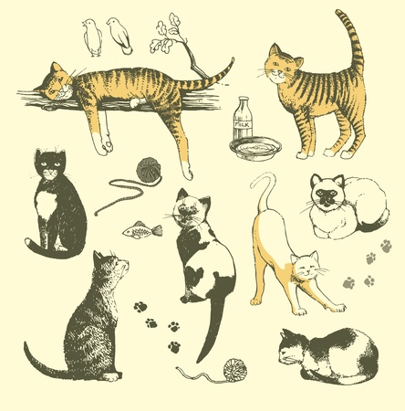 lazy: illustration that represents the set of hand-drawn cats.