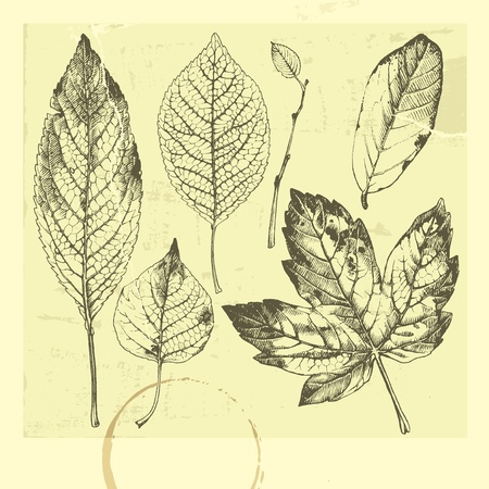 autumn leaves: Hand-drawn leaves. Autumn leaves. Set of leaves. Set of hand-drawn leaves. Illustration