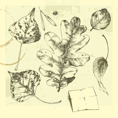 Hand-drawn leaves. Autumn leaves. Set of leaves. Set of hand-drawn leaves. Illustration
