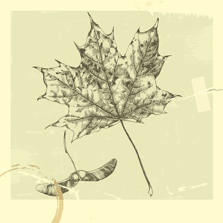 tracing: Vector illustration that represents the hand-drawn autumn leaves.