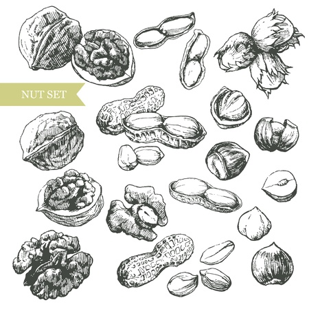 avellanas: Vector arte-ilustraci�n que representa los diversos tipos de frutos secos. Vectores