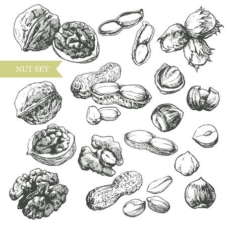 Walnut: Vector nghệ thuật minh họa đại diện cho các loại khác nhau của các loại hạt. Hình minh hoạ