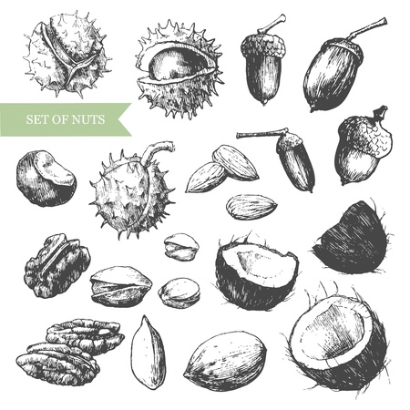 represents: Vector hand-drawn illustration that represents the various kinds of nuts.  Illustration
