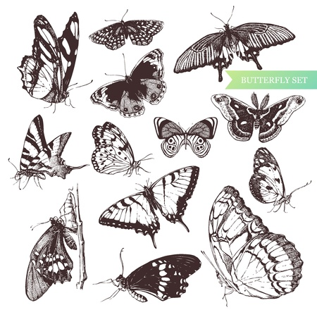 art-illustration of hand-drawn butterflies. Vector