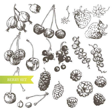illustration of hand-drawn berries. Vector
