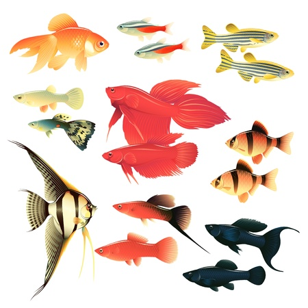 Aquarium fishes: great collection of highly detailed illustrations with tropical tank fishes. Vector