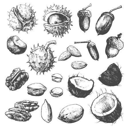 noix de coco: Main tr�s d�taill� �tabli noix isol� sur fond blanc.