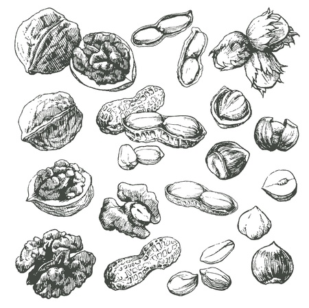 walnut tree: Great collection of highly detailed hand drawn nuts isolated on white background.