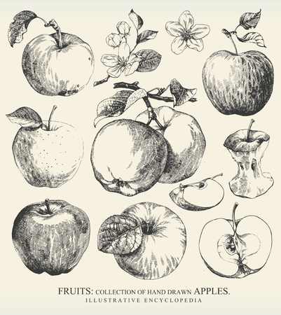 apple isolated: Collection of highly detailed hand drawn apples.