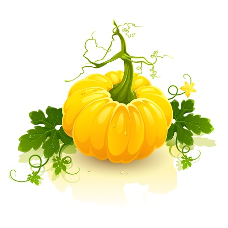 Vector clip art illustration of ripe juicy pumpkin isolated on white background Vector