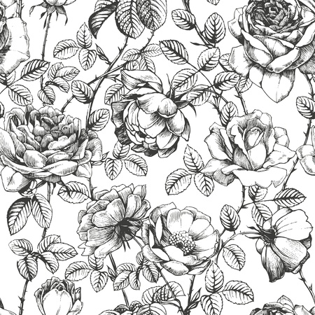 vintage: Virágmintás kézzel rajzolt rózsák Illusztráció