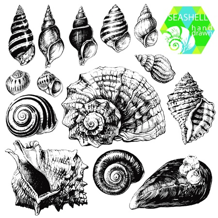 caracol: Dibujado a mano colección de ilustraciones del seashell diferentes aislados sobre fondo blanco
