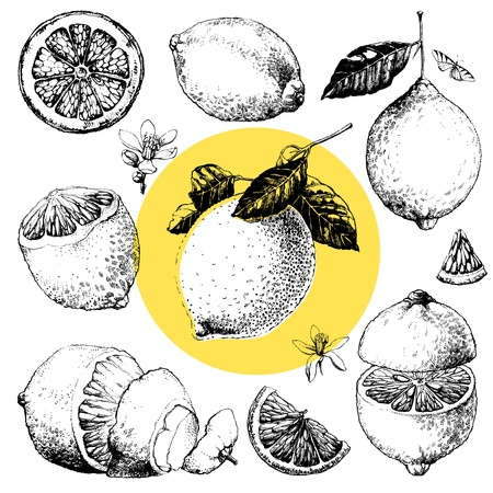 lemon tree: Hand drawn illustrations of beautiful yellow lemon fruits