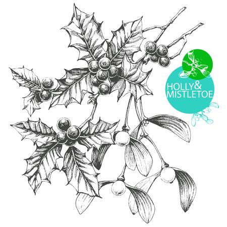 muerdago: Dibujado a mano ilustración del arte de clip de las famosas plantas de Navidad muérdago y el acebo - Vectores