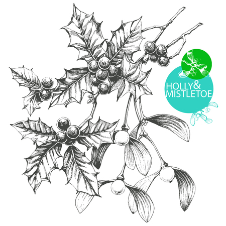 Hand drawn clip art illustration of famous Christmas plants - mistletoe and holly