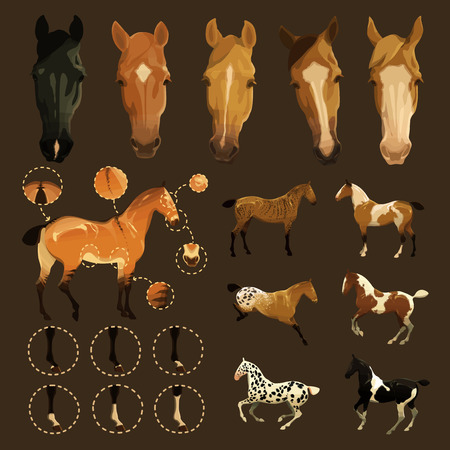 Clip art illustrations of horse facial and leg markings, primitive markings of dun coat   coloring  Also variations of some rare coat colors