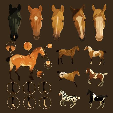 legs stockings: Ritagliare illustrazioni di cavallo tratti del volto e delle gambe, segni primitivi di Dun cappotto colorare anche le variazioni di alcuni colori del mantello rare Vettoriali