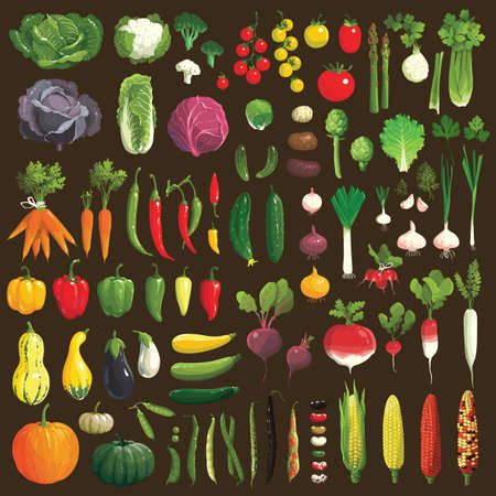 Great collection of the clip art vegetables Vector