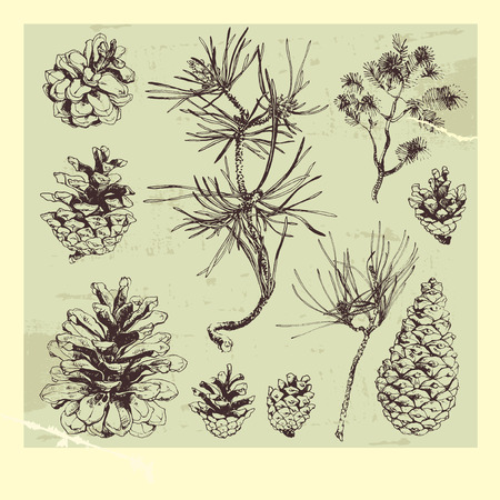 conifers: Hand drawn pine tree cones and branches