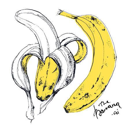 banane: Encre Illustration tirée de magnifiques fruits banane jaune