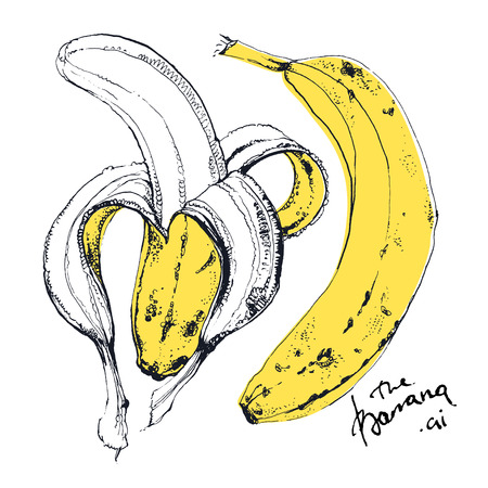 unpeeled: Ink drawn illustration of gorgeous yellow fruit banana