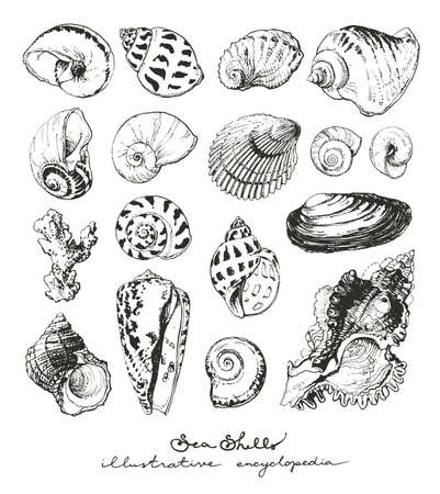 cockle: Isolated hand drawn illustrations of seashells
