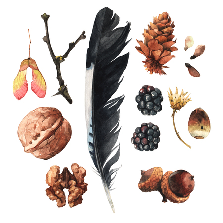 pines: Watercolour illustrations with walnuts, berries, acorns and some other forest items