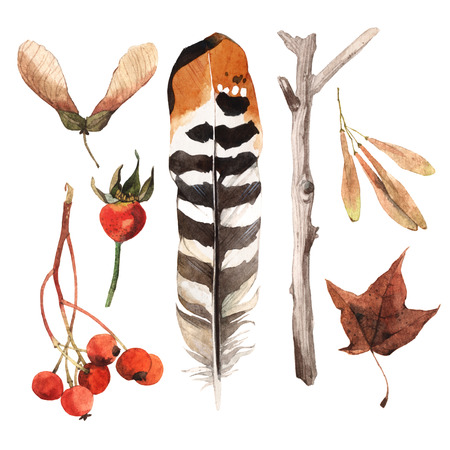 encyclopedias: Watercolour illustrated items collected in parks and gardens. Pheasant feather, white little branch, brier and tree seeds