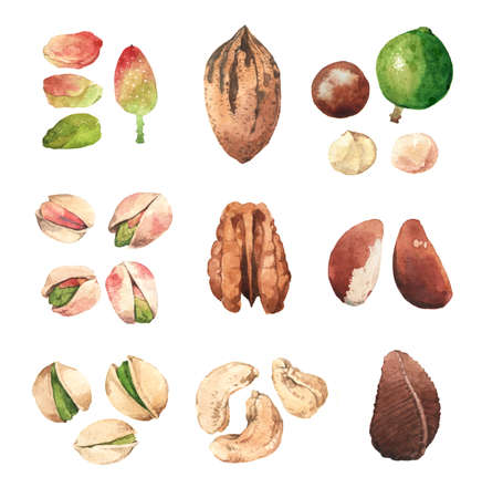 tree nuts: Watercolour highly detailed clip art illustrations of nuts: pistachio, cashew, pecan, macadamia and Brazil nut Stock Photo
