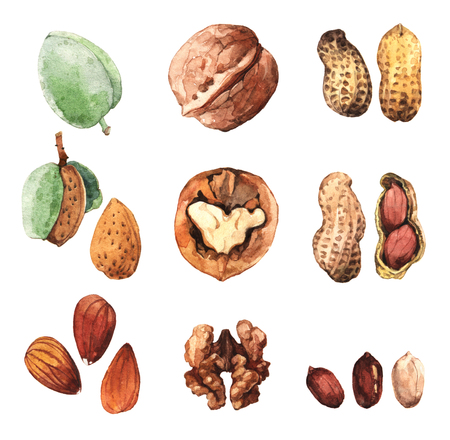 watercolor: Watercolour highly detailed clip art illustrations of nuts: walnut, almond, peanut Stock Photo