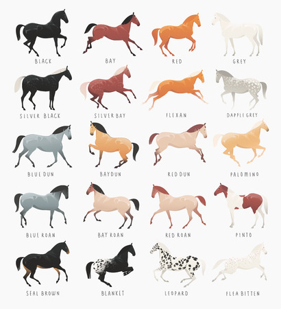 pinto: Equestrian illustrations of common horse coat colors