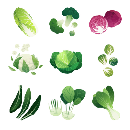 cabbage: Clip art illustrations of different cabbage types Illustration