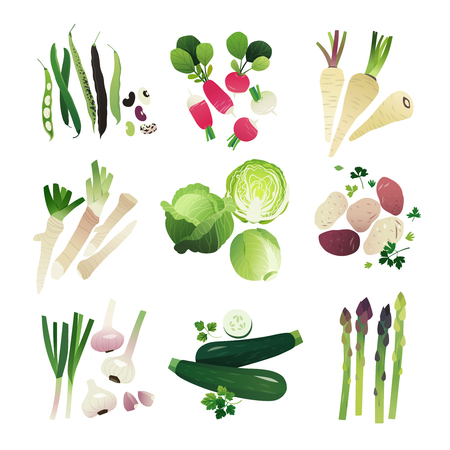 lechuga: Clip art vegetable collection of beans, raddish, parsnip, horse raddish, green cabbage, potato, garlic, zucchini and asparagus