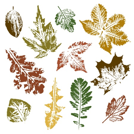 Collection of autumn leaves imprints Illustration