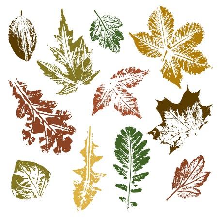 weegbree: Het verzamelen van herfstbladeren imprints Stock Illustratie