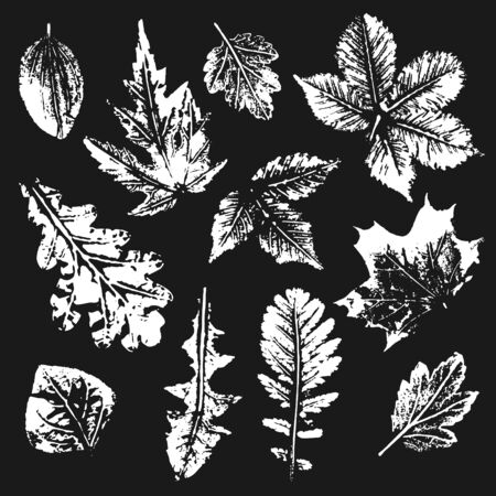 plantain: Collection of white leaves imprints on black background Illustration