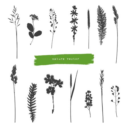 grower: Collection of summer herbs black silhouettes on white background Illustration